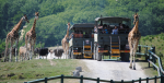 2 FOR 1 entry to Port Lympne Hotel and Reserve